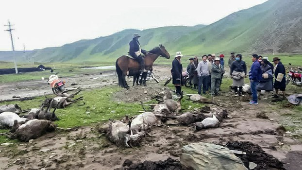Mud flood in Tsolho where dozens of wild animals washed away in the mud